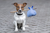 dog with a bag on a stick