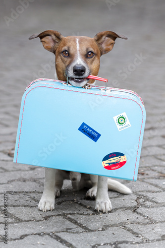 Foto op Canvas Dragen Dog with luggage