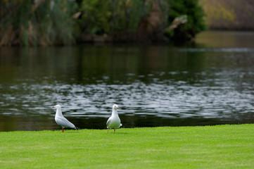 鳥・水辺・芝生