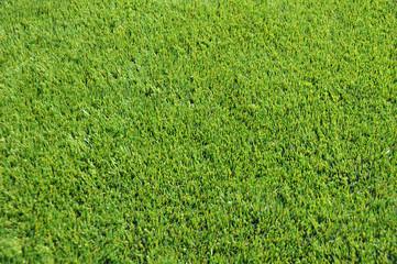 gazon synthétique pelouse football