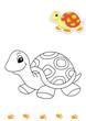 animali da colorare, tartaruga