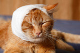 cat ear ache with bandage