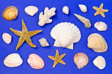 Muscheln, Seesterne, Schnecken Sammlung