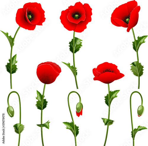 Set from red poppies on the white background
