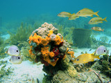 Colors of sealife