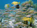 Fototapete Unterwasser - Fisch - Fische