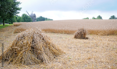 handmade rye sheaves on field with wooden windmill on background