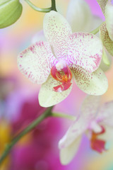 Close-up of orchid..