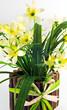Pot of yellow daffodil flowers