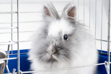 White angora bunny