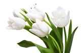 White tulips - 39702017