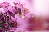Fototapete Belle - Schönheit - Blume