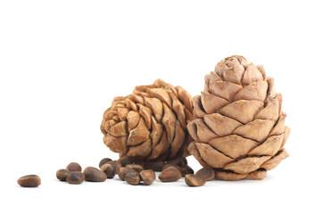 Cedar cones on a white background