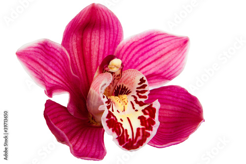 Fototapeten,orchidee,blume,lila,rosa