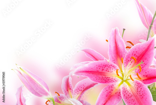 Canvas Lotusbloem Pink lily