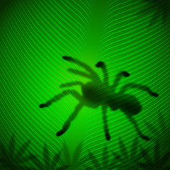 Spider shadow on banana leaf in the tropical sun