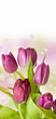 spring feeling with pink tulip