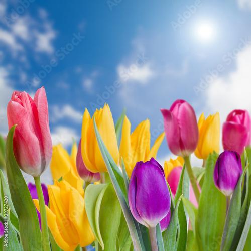 wiosenny-ogrod-tulipany-piekne-wiosenne-kwiaty
