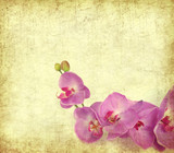 Fototapety paper background with purple orchid .