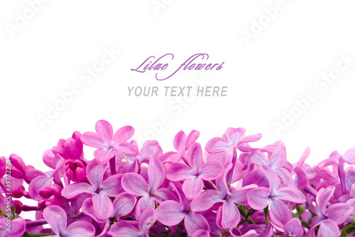 Keuken foto achterwand Lilac Lilac flowers with sample text