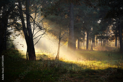Foto op Canvas Bos in mist sunbeams in fog in the forest