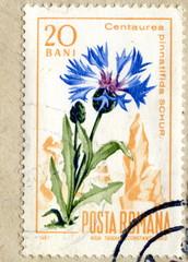 """Vintage romanian postage stamp """"Cornflower"""""""