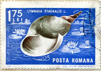 "Vintage romanian postage stamp ""Great pond snail"""