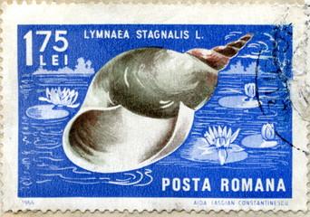 "Vintage romanian postage stamp ""Great pond snail"""