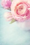 Fototapety Pink flowers