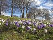 Fleur crocus printemps