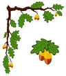 drawn oak branch with leaves and acorns