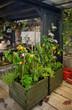 seasonal home garden