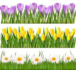 Fresh spring and flower borders  Vector
