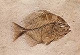 Fossil of a Fish