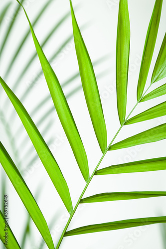 Leinwanddruck Bild Tropical Leaf Closeup