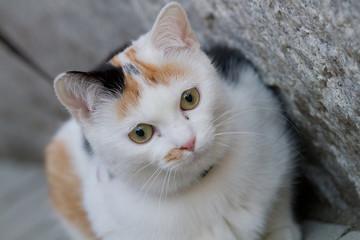 Ritratto gatto in diagonale