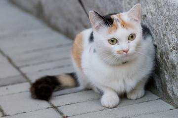 ritratto gatto femmina tricolore