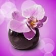 Fototapeten,orchidee,rose,lila,vase