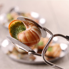 spoon with bourgogne snail