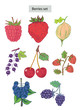 berries set hand drawn illustrations