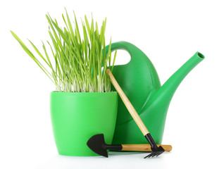 beautiful grass in a flowerpot, watering can and garden tools
