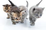 Fototapete Spiel - Spielen - Haustiere