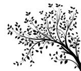 Fototapety tree branches silhouette isolated white background