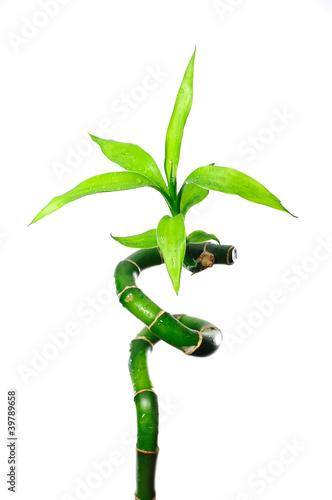 Fototapeten,bambu,papier,stiel,grün