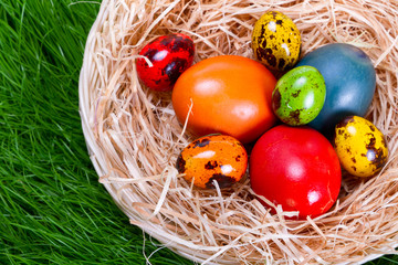 Colorful painted easter eggs in nest over the grass