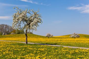 Oberschwäbischer Frühling