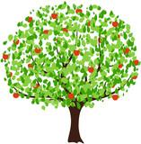 Apfelbaum vektor