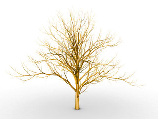 The golden tree on a white background