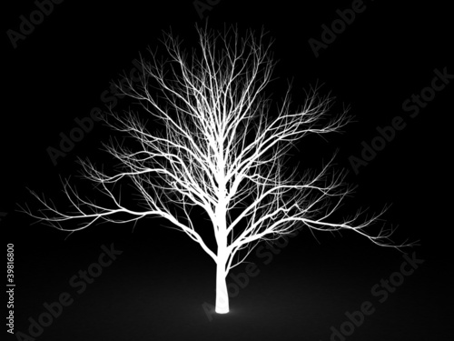 Stencil a tree on a black background