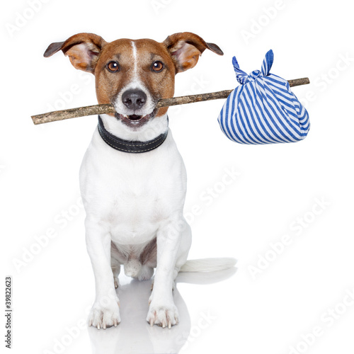 Fotobehang Dragen dog with a stick and a blue bad